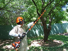 Hisey Company Tree Trimming with pole pruner Matthew Hisey