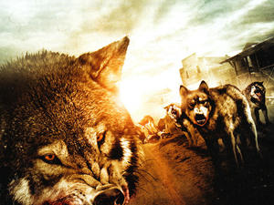 WOLF TOWN (Feature Film)