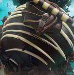 Chocolate Cake Individual