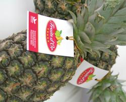 Ananas Sugarloaf