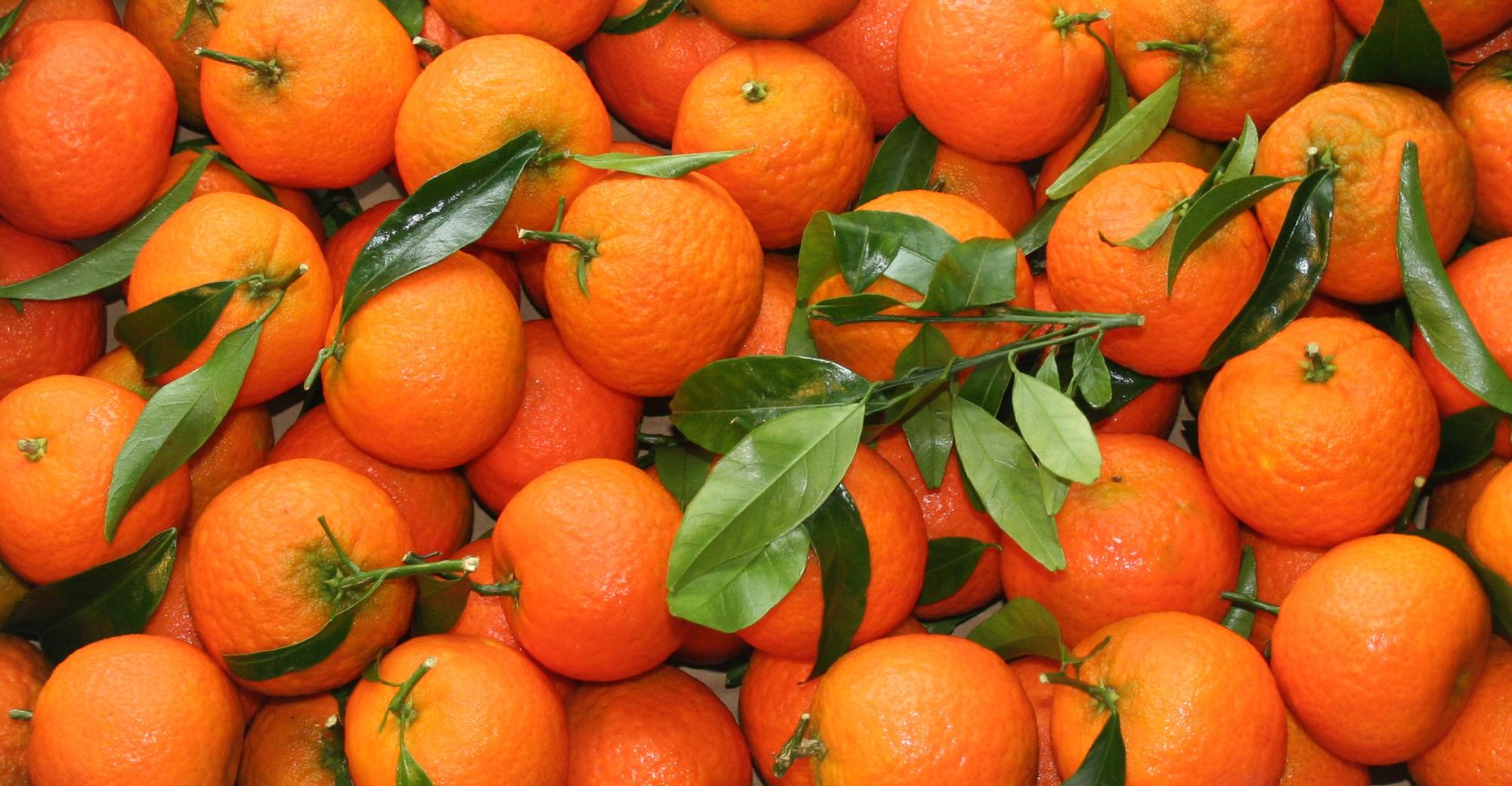 fd-mandarine