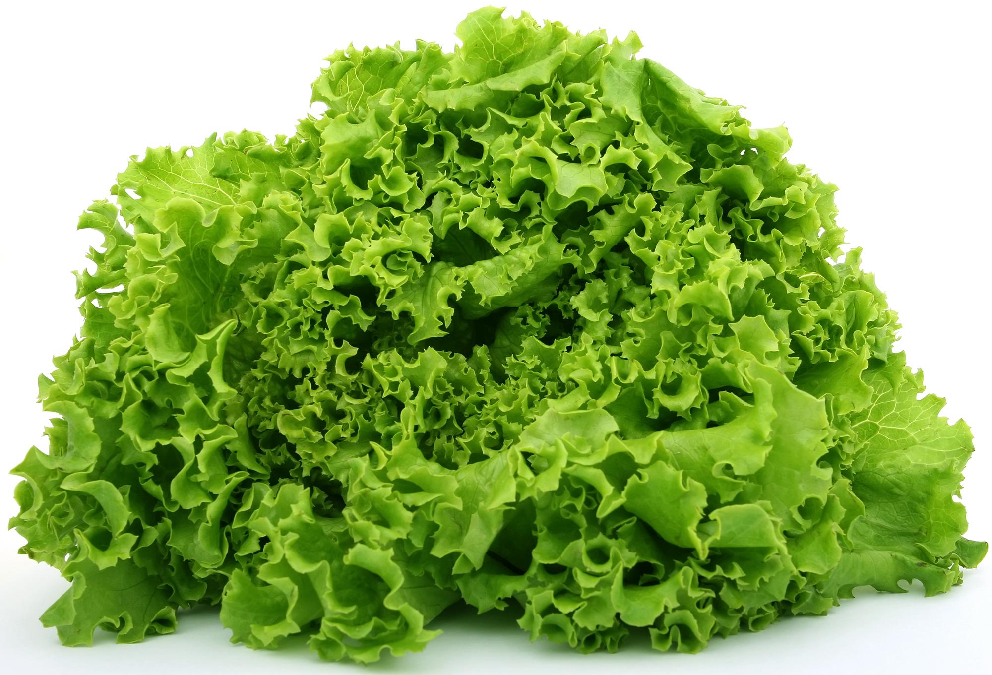 fd-salade