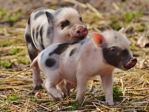 Jak przeżyć bez mięsa - masz ochotę na trochę wegetarianizmu?