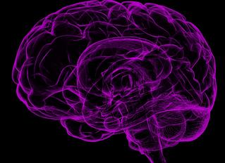 The Parasympathetic Nervous System