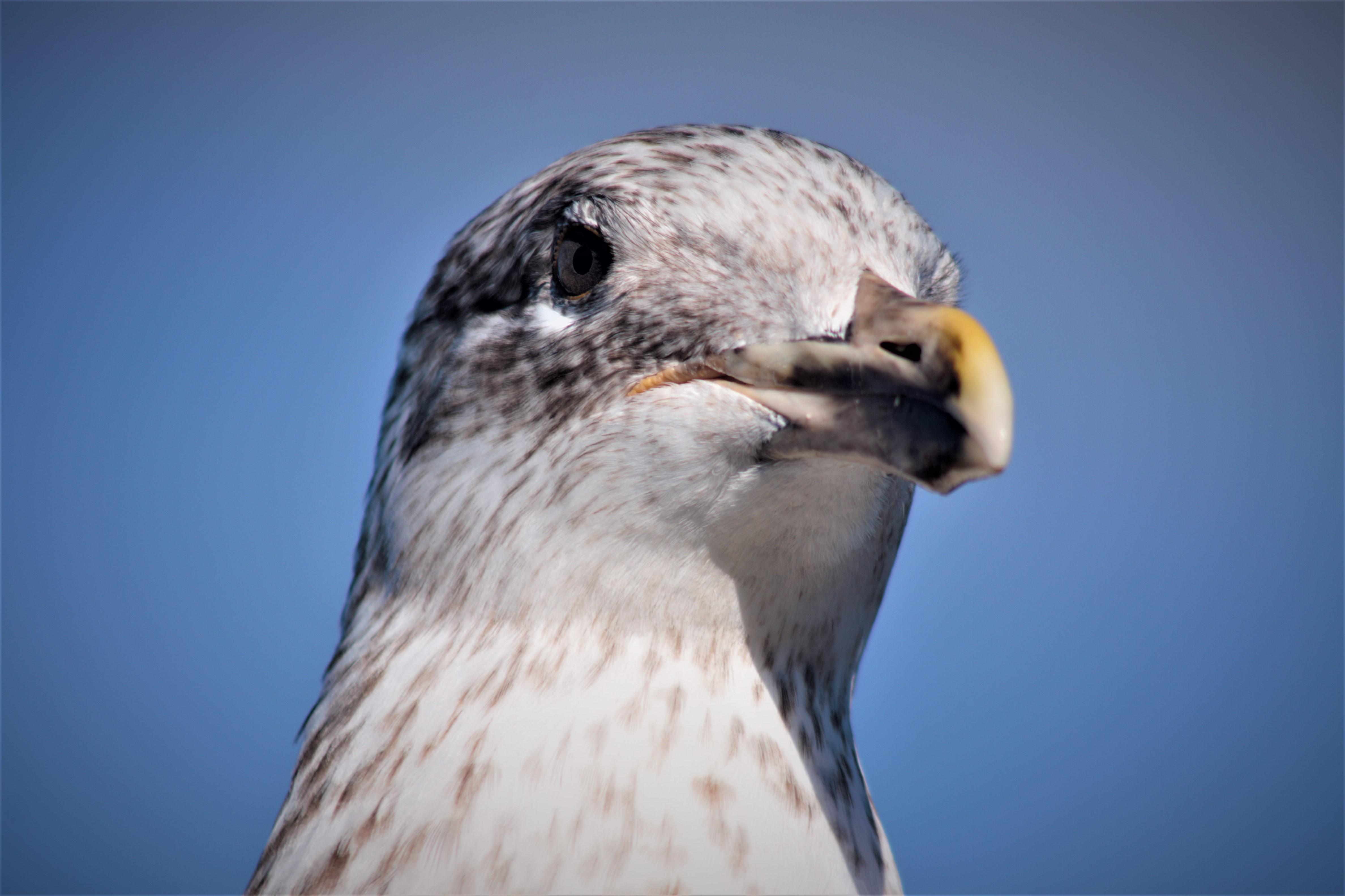 """""""Beak"""""""