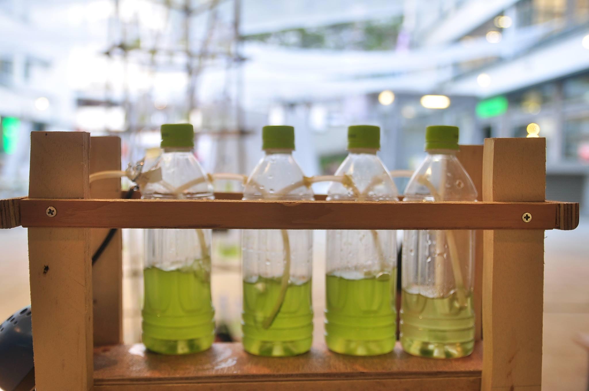 DIY Algae farm workshop