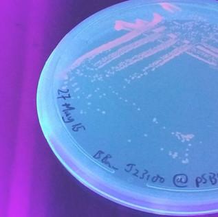 Fit.coli