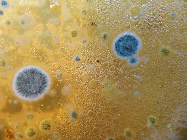 5. Mold on bioplastic