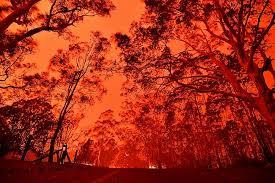 Les conséquences à long terme des incendies en Australie