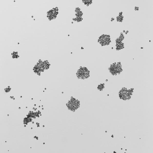microbez