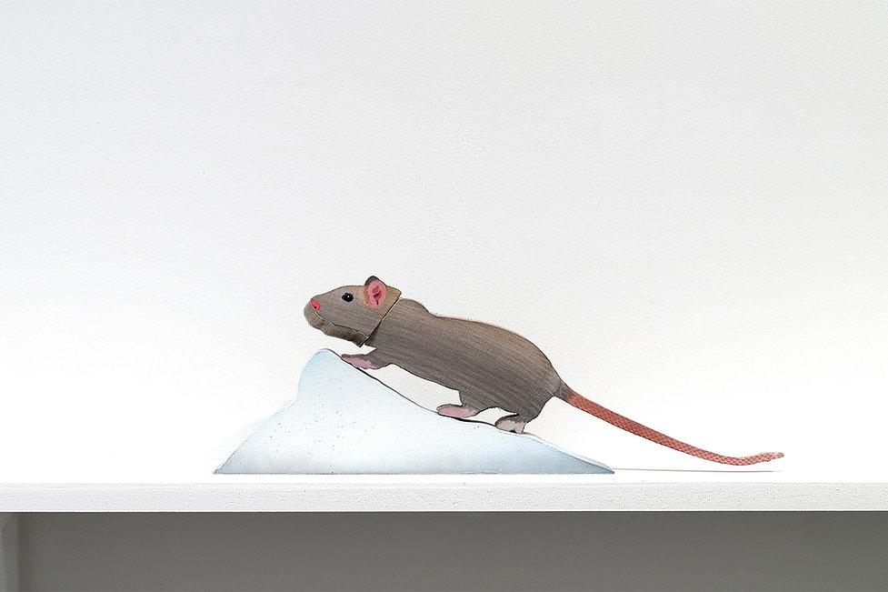 snow-lump-rat_1200x800px.jpg