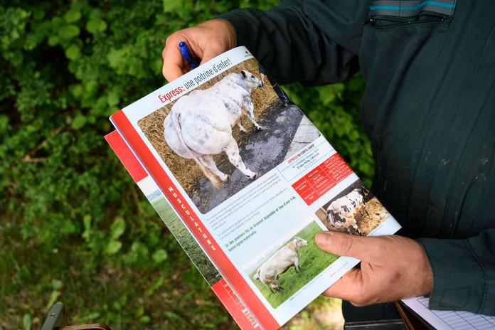 Vétérinaires ruraux - Wallonie - Belgique