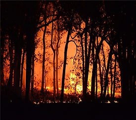 WW photo-of-burning-forest-4621457.jpg