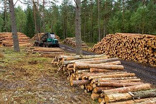 esmeraldas deforestacion.jpg