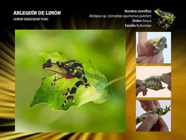 Rana Arlequín de Limón