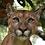 Thumbnail: Puma