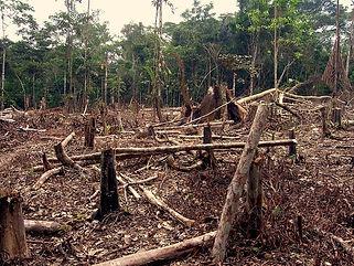 deforestacion amazonia.jpg