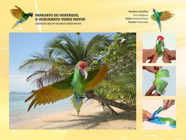 Papagayo de Guayaquil