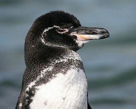 pinguino2.jpg
