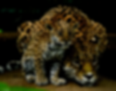 Jaguar AParedes foto.png