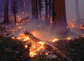 quito incendio 2.jpg