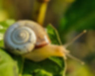 white-and-brown-shell-snail-on-green-lea