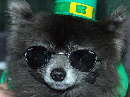 The Luck of the North Texas Irish