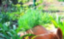 Ландшафтныйдизайн и сады на Северном Кипре