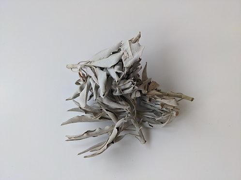 White Loose Leaf Sage