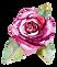 Rose%202_edited.png