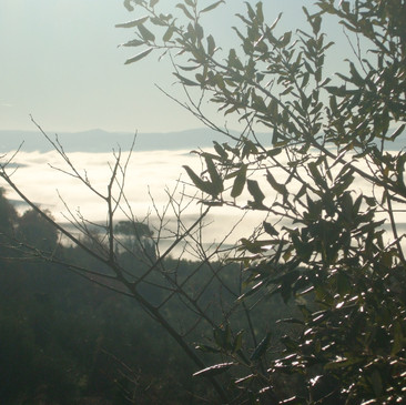 Nebbia in Val d' Orcia