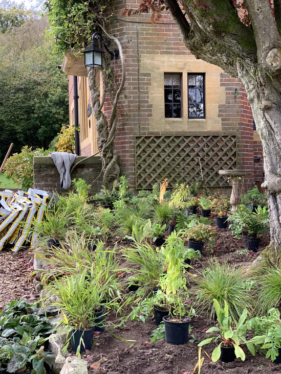 Setting out plants for planting in a Worcestershire garden.