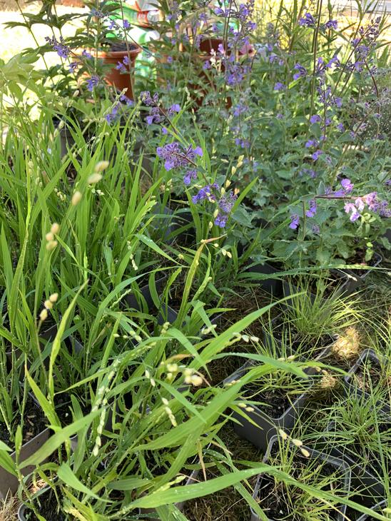 Planting preparations in a Balham garden.