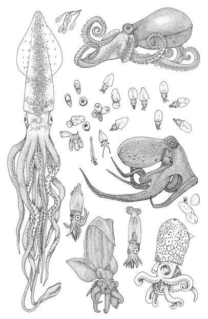 cephalopods-edited.png