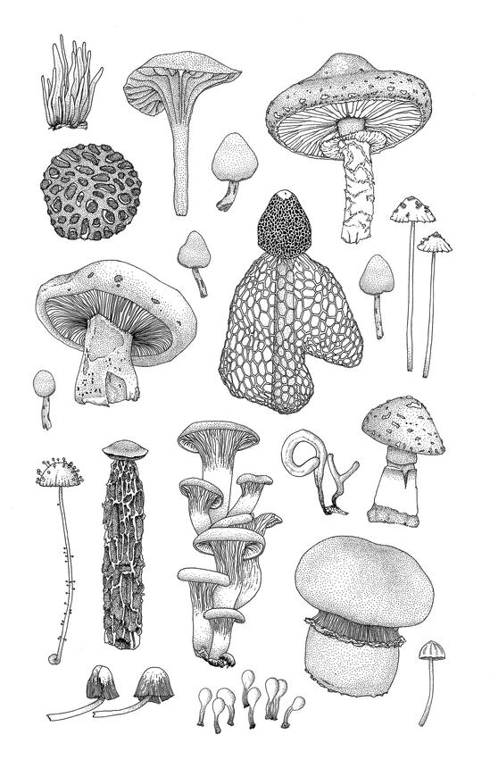 mushrooms-edited.png