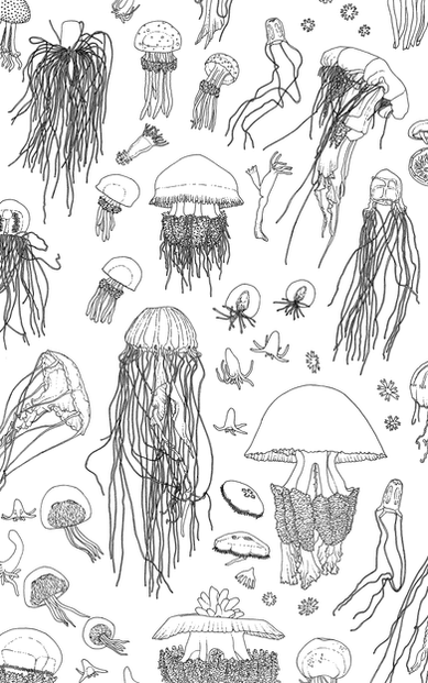jellies-edited.png