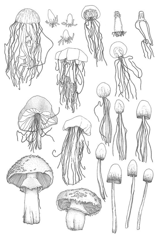 mushrooms-x-jellies-edited.png