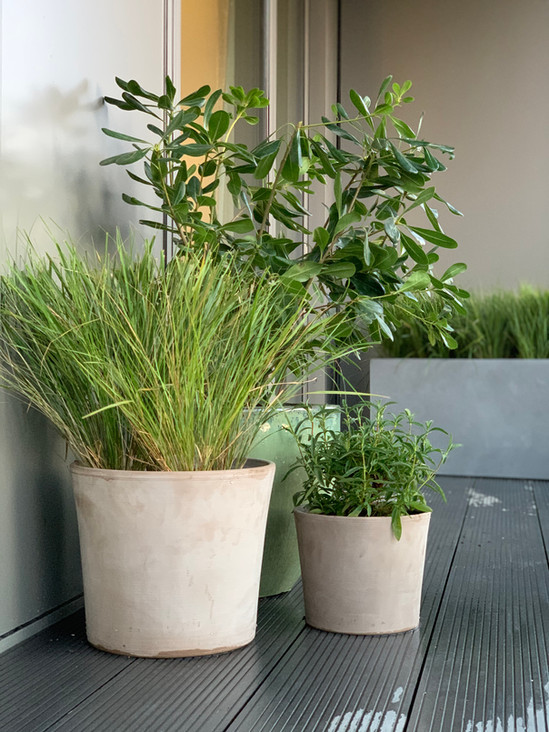 External planting with Studio Ro Co for Dodds & Shute in Canary Wharf.