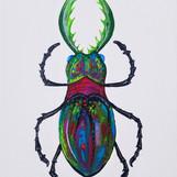 The Horned Beetle Kati Falcon Acrylics 1