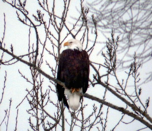 Eagle 2-2.jpg
