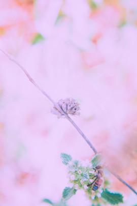 Art:Landscape42.jpg