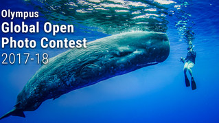 ¥1m grand prize: Olympus Global Photo Contest