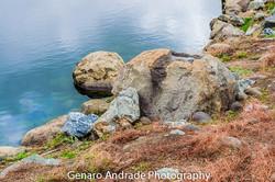 """Turtle, Rock Formation"""