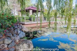 Ferrari Pond, Angler's Cove, Lincoln Ca