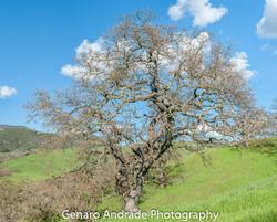 """Lone Tree"""