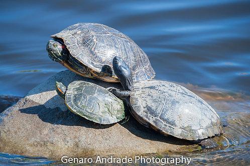 """""""Turtles 3"""""""
