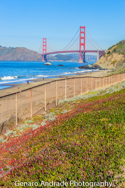 Golden Gate Bridge 2, Bakers Square