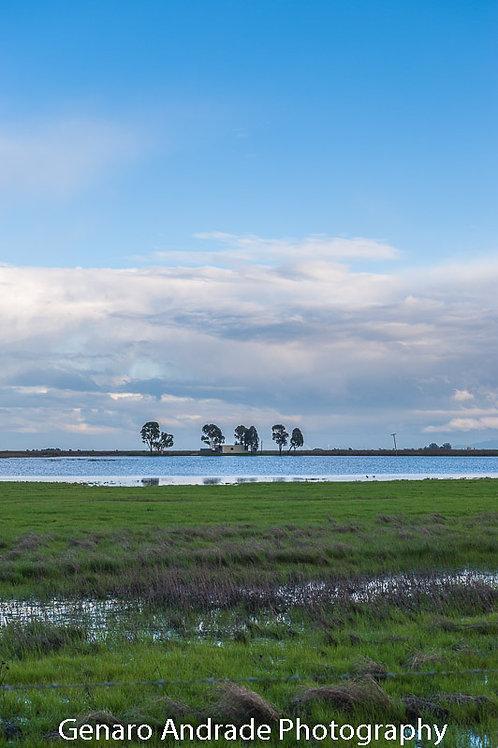 """Marshlands View"""