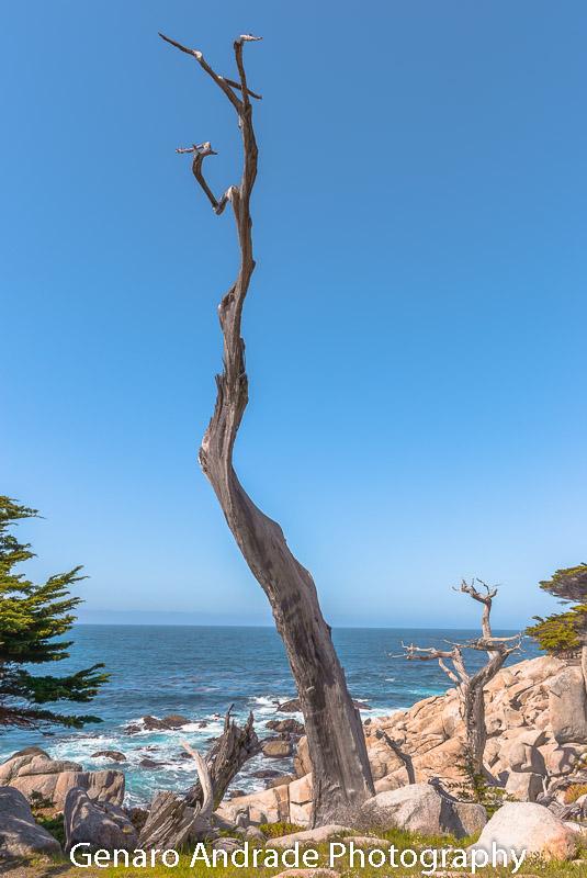 """Ghost Tree 2"""