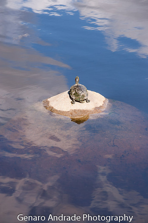 """""""Turtles 2"""""""